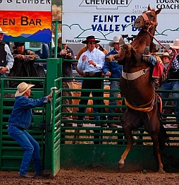Bareback riding bronco riding Helmville Rodeo