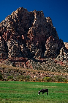 Spring Mountain Ranch State Park Nevada - burros