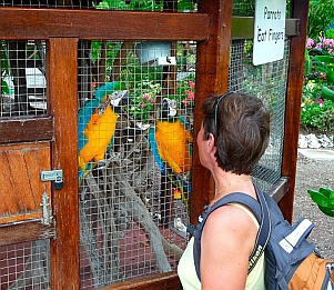 Macaws at the marina