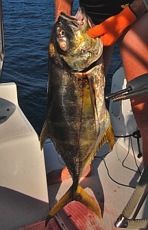 Yellowfin tuna catch - Manzanillo, Colima, Mexico