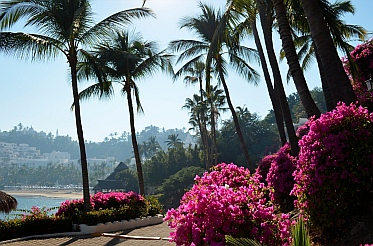 Bougainvillea and palm trees on the paths of Las Hadas Resort, Mexico.