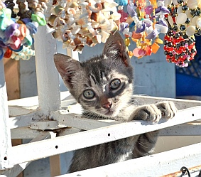 Kittens play at the Ixtapa market, Mexico.