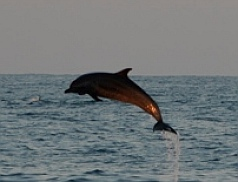 Leaping dolphins say hello