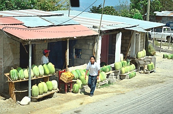 Watermellon, Chiapas, Mexico