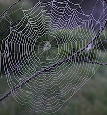 Perfect spiderweb
