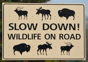Yellowstone National Park Wildlife on Road sign