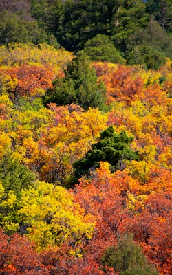 Ridgway Colorado Autumn Foliage Dallas Creek Dallas Divide San Juan Mountains