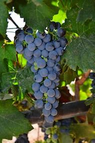 Fruita Colorado Palisade Colorado Wineries and Wine Country