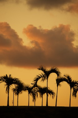 Palms at sunset in Marina Chiapas (Puerto Madero) Mexico