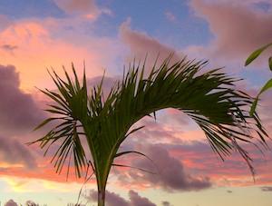 Marina Chiapas (Puerto Madero Puerto Chiapas) sunset on palm treet