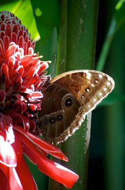 Butterfly Hagia Sofia Huatulco Mexico Flower Nursery