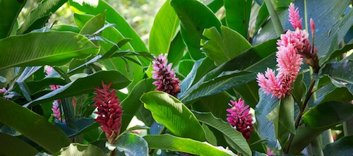 Hagia Sofia Huatulco Mexico Flower Nursery