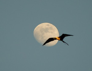Santa Cruz Bay anchorage Huatulco Mexico full moon and frigate bird