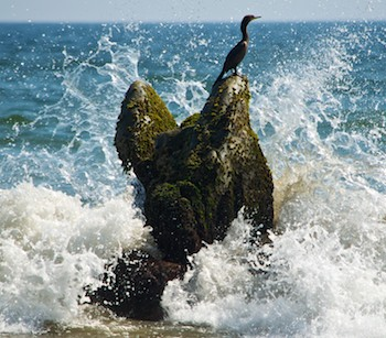 A cormorant in the spray at Playa La Bocana Huatulco, from our sail blog