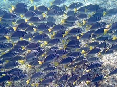 Schools of fish playa de entrega huatulco sailing blog