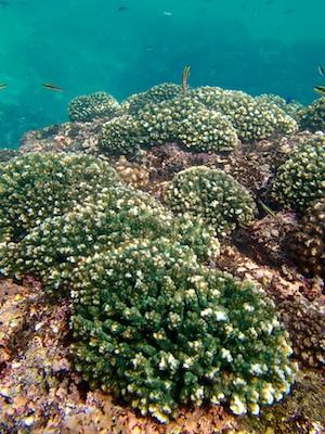 Coral Landscape Santa Cruz Bay huatulco sailing blog
