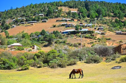 Horse grazing Michoacan Mexico living aboard blog