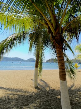 Zihuatanejo Playa Principal palm tree cruising blog