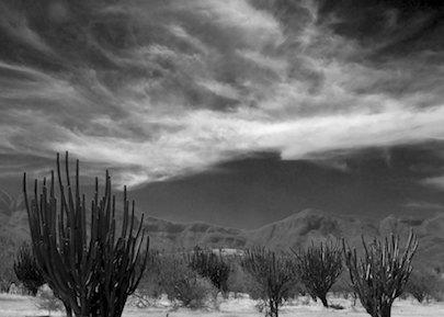 Michoacan Mexico cactus