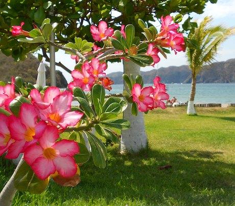 Cuastecomate Flowers