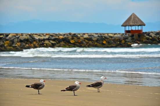 nuevo vallarta gulls and beach