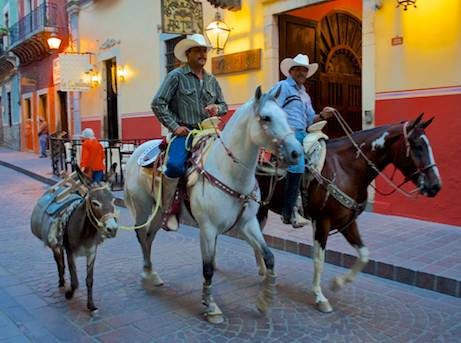 Horses and donkey in the street