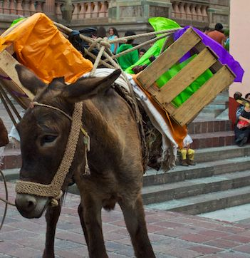 Donkey with wine on his back