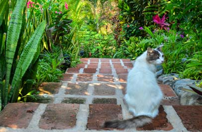 Cat on the brick stairs