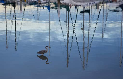 Heron and reflected masts