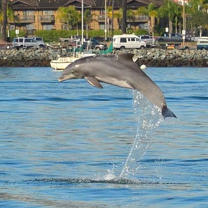Dolphin leaps in the air