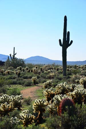 Lush Sonoran Desert