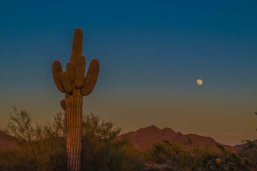 Saguaro and moon at dusk in Arizona