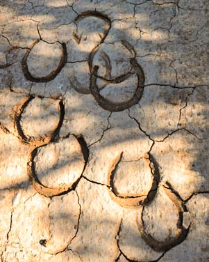 Horse hoof prints in the mud