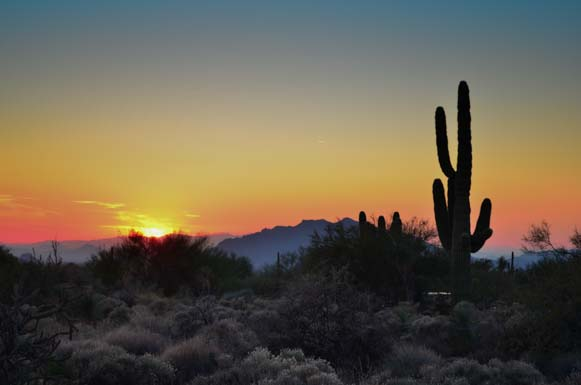 Sonoran desert sunset in Arizona