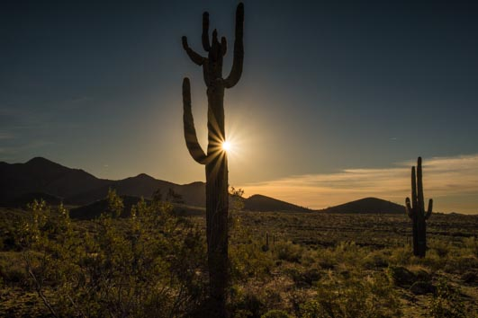 Sun star burst effect on a saguaro cactus