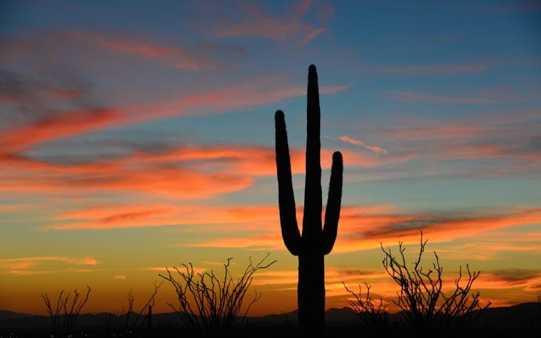 Classic Phoenix - Saguaro cactus at sunset