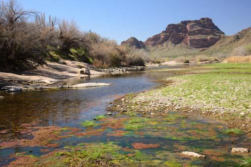Colorful Salt River Arizona