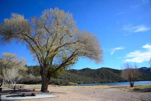 Tree on Saguaro Lake beach