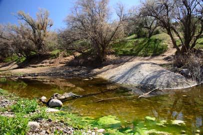 Shoreline of the Salt River
