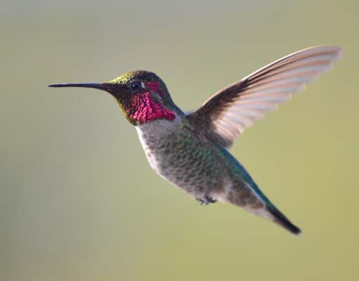 An RV living space become a true home with hummingbird feeders!