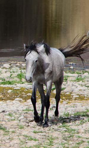 Wild horse walking