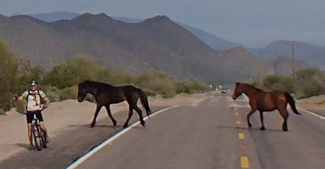 Mark watches horses cross the highway