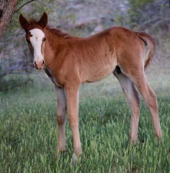 Wild colt standing in grass