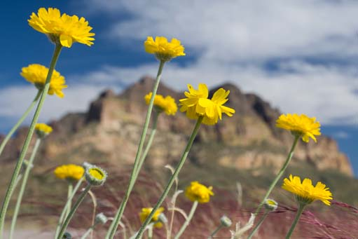 Hunting Spring Wildflowers In Arizona