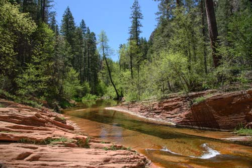 Stream on the West Fork trail Sedona Arizona