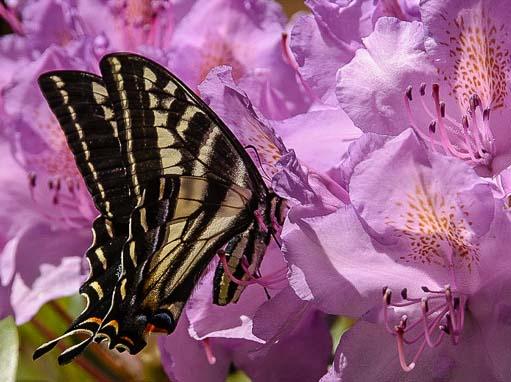 Butterfly on a wildflower