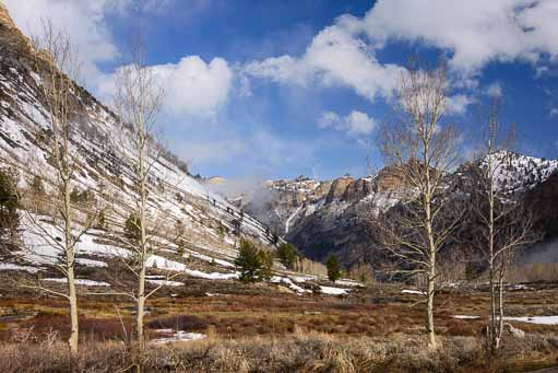 Trees frame Lamoille Canyon near Elko Nevada