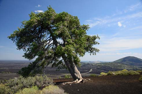 Tree at Craters of the Moon National Monument in Idaho