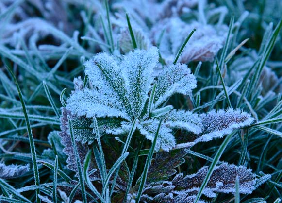 Frost at our feet in Maroon Bells Colorado