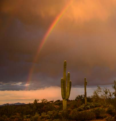 Rainbow arching over saguaro cactus in  Arizona